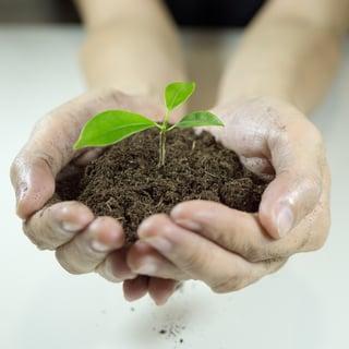 Plant Growing.jpg